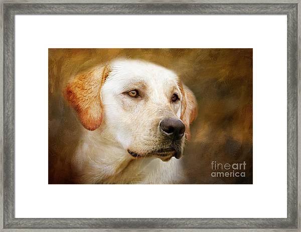 Golden Boy Framed Print
