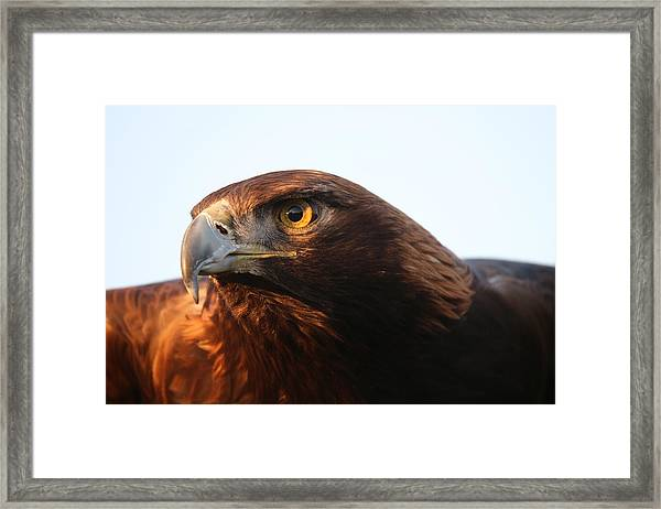 Golden Eagle 5151803 Framed Print