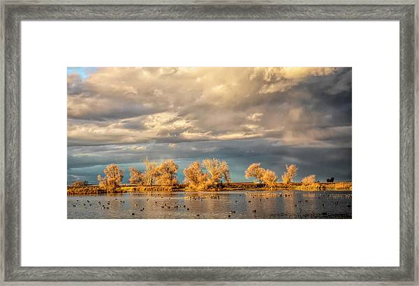 Golden Hour In The Refuge Framed Print