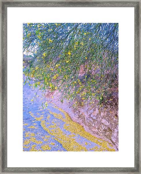 Golden Petals In A Desert Wash Framed Print