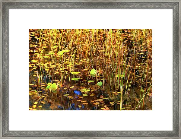 Framed Print featuring the photograph Golden Pond by Dee Browning