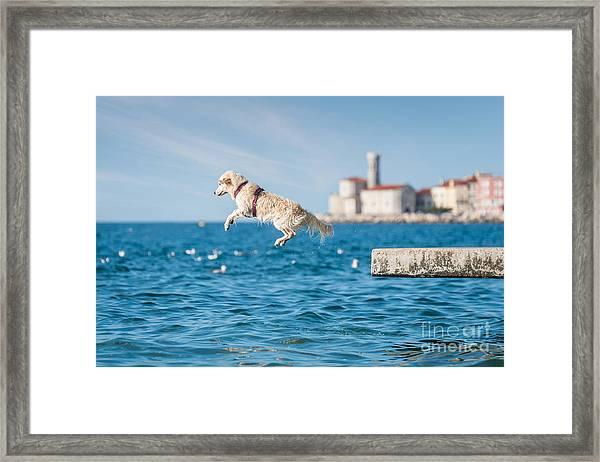 Golden Retriever Dog Jumping Into Sea Framed Print by Sonsart
