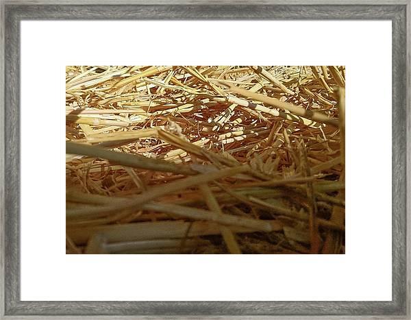 Golden Straw Bed Framed Print