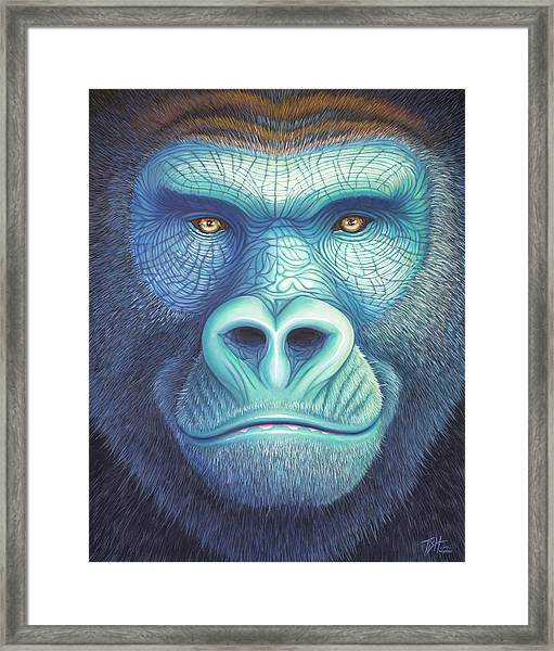 Gorilla Face Framed Print