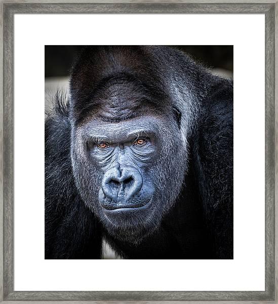 Gorrilla  Framed Print