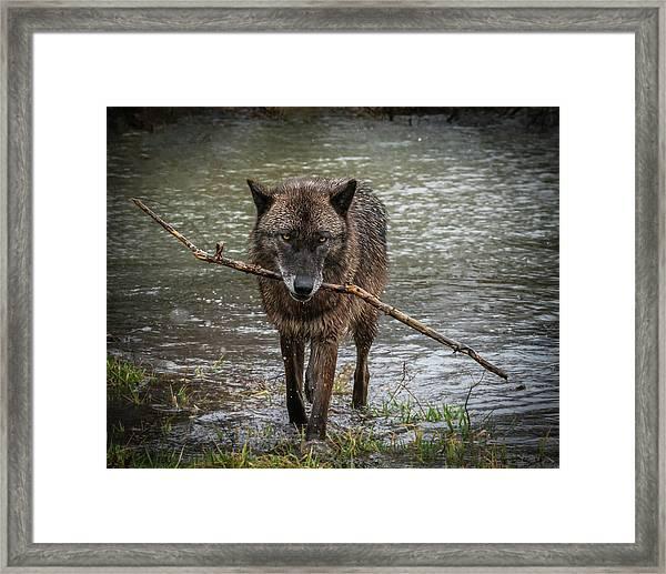 Got The Stick Framed Print