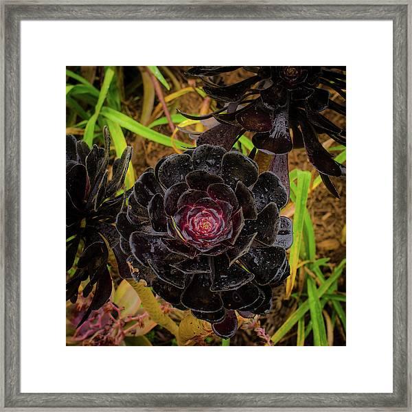 Goth Succulent Framed Print