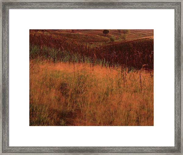 Grasses And Sugarcane, Trinidad Framed Print