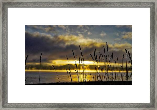 Grassy Shoreline Sunrise Framed Print