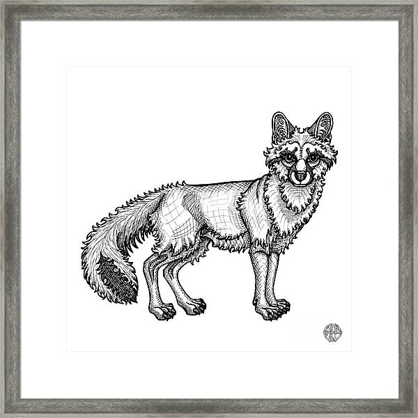 Framed Print featuring the drawing Gray Fox by Amy E Fraser
