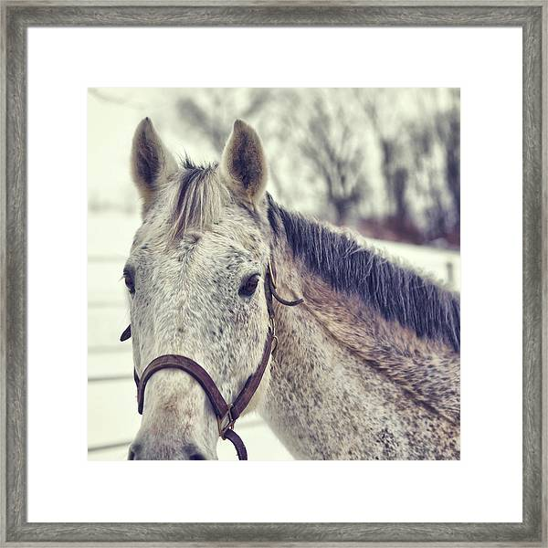 Gray On Winter White Framed Print by JAMART Photography