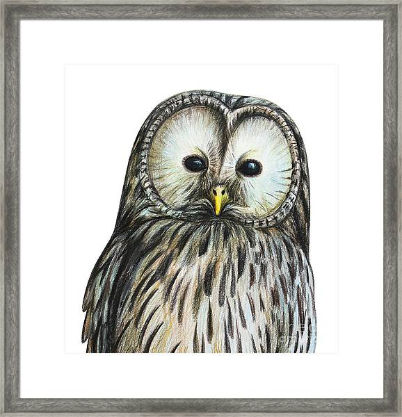 Gray Owl Portrait Drawing Framed Print