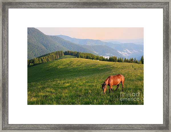 Grazing Horse On Mountain Pasture Framed Print