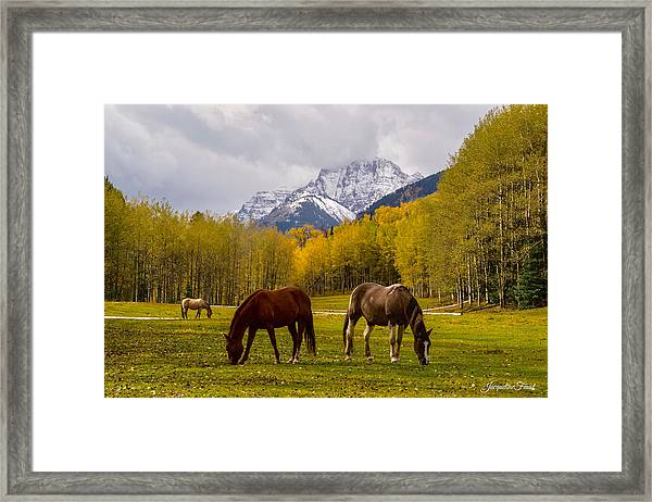 Grazing In Aspen Framed Print