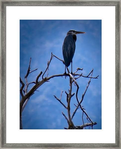 Great Blue Heron 3 Framed Print