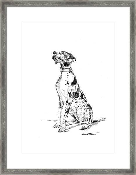 Great Dane 02 Framed Print