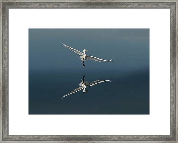Great Egret Flying With Reflection Framed Print by Adam Jones
