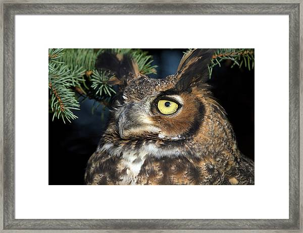 Great Horned Owl 10181801 Framed Print