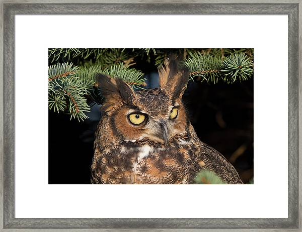 Great Horned Owl 10181802 Framed Print