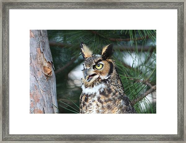 Great Horned Owl 5151801 Framed Print