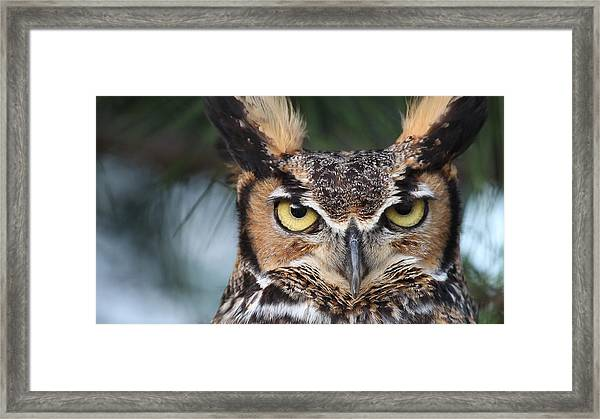 Great Horned Owl Eyes 51518 Framed Print