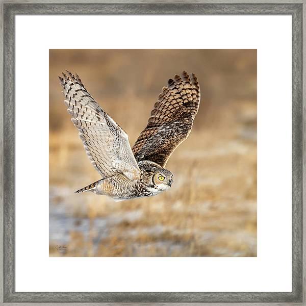 Great Horned Owl In Flight Framed Print