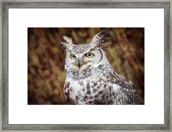 Framed Print featuring the photograph Great Horned Owl Portrait by Patti Deters