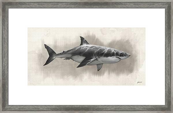 Great White Shark Drawing Framed Print by Steve Goad