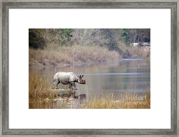 Greater One-horned Rhinoceros Specie Framed Print