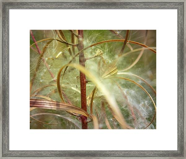 Framed Print featuring the photograph Green Abstract Series No.11 by Juan Contreras