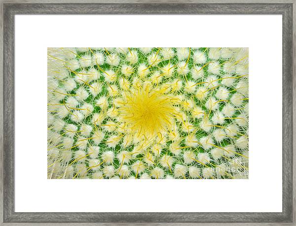 Green Cactus And Yellow Prickles Framed Print
