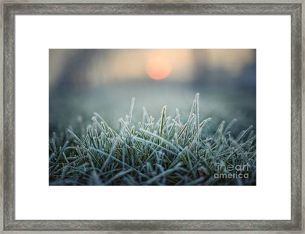 Green Grass With Morning Frost And Red Framed Print by Chromakey