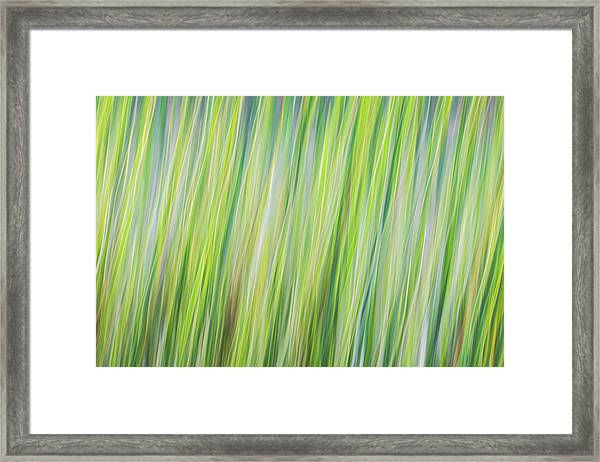Green Grasses Framed Print