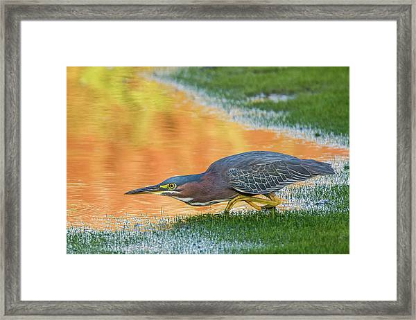 Green Heron 6227-061219-2 Framed Print