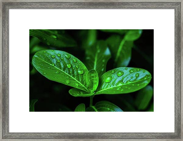 Green Leaf With Water Framed Print