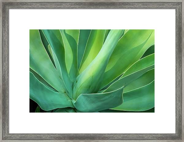 Green Minimalism Framed Print
