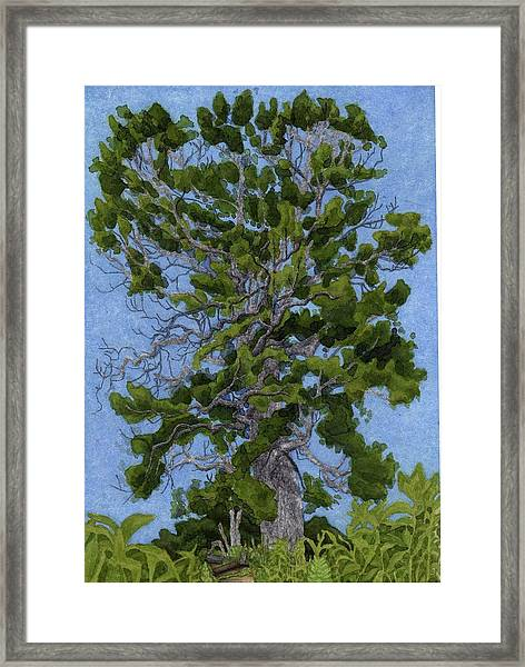 Green Tree, Hot Day Framed Print