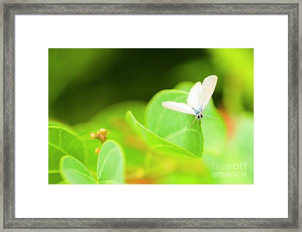Green Wilderness Framed Print