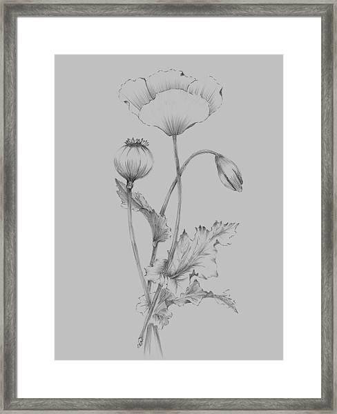 Grey Flower Sketch 3 Framed Print