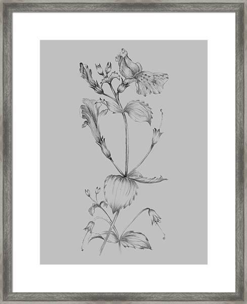 Grey Flower Sketch I Framed Print