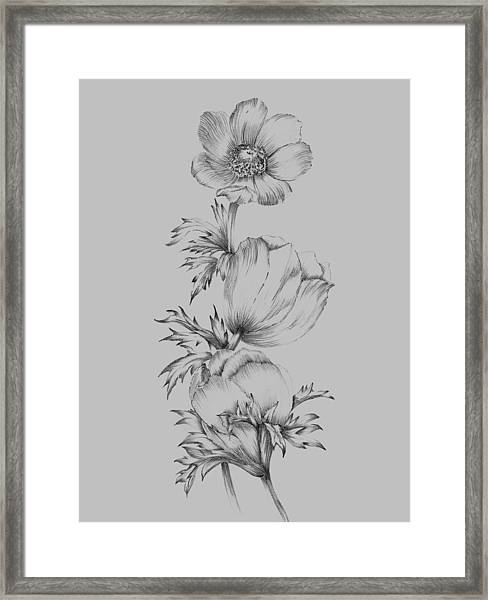 Grey Flower Sketch II Framed Print