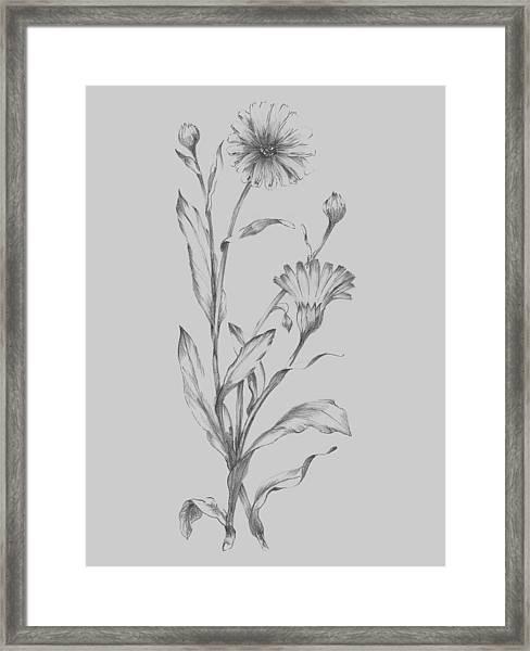 Grey Flower Sketch Illustration 3 Framed Print