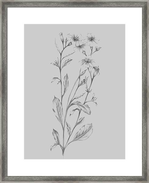 Grey Flower Sketch Illustration Framed Print