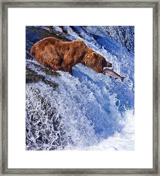 Grizly Bears At Katmai National Park Framed Print