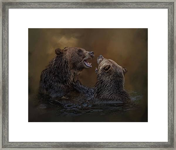 Grizzlies At Play Framed Print