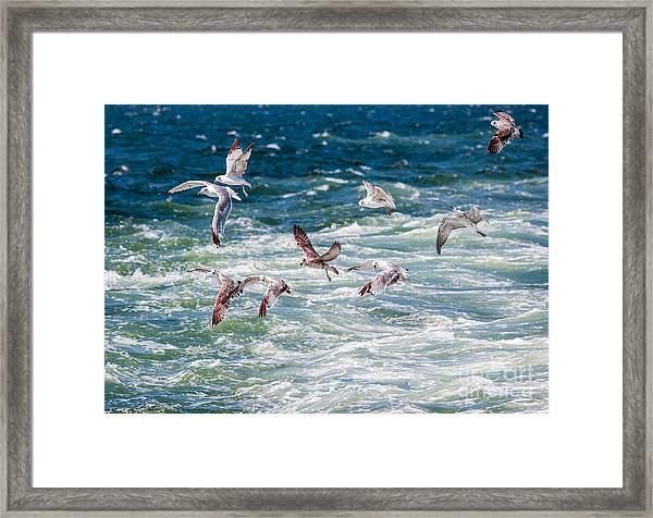 Group Of Seagulls Over Sea Framed Print