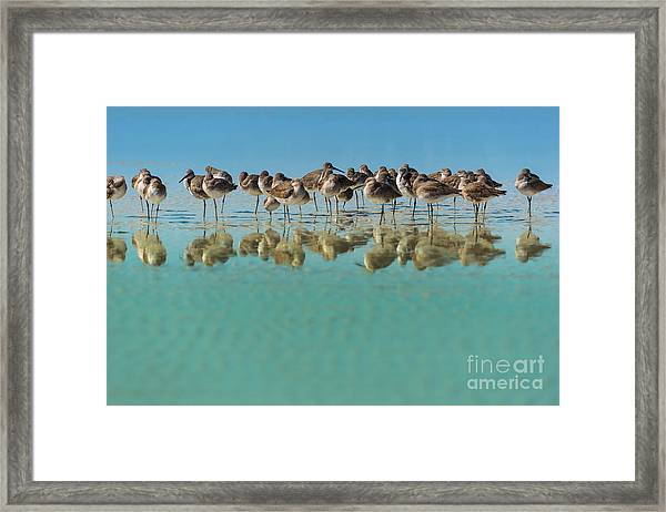Group Of Willets Reflection On The Framed Print