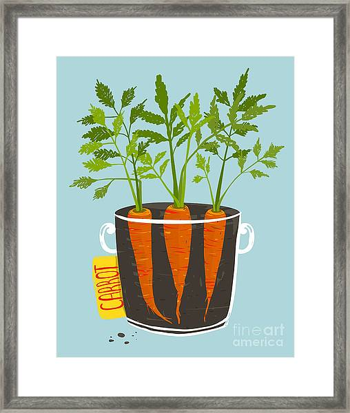 Growing Carrots With Green Leafy Top In Framed Print