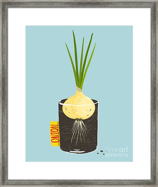 Growing Onion With Green Leafy Top In Framed Print