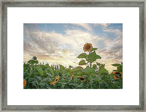 Growing Tall Framed Print